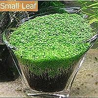 Livedeal - Semillas de césped para Acuario (10 g/Bolsa, decoración de Jardines, Jardines, Jardines, Jardines y paisajes)
