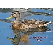 Das Leben der Enten (Wandkalender 2018 DIN A4 quer): Ein besonderer Entenkalender (Monatskalender, 14 Seiten ) (CALVENDO Tiere) [Kalender] [Apr 01, 2017] Kattobello, k.A.