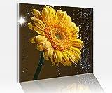 Acrylglasbild 50x50cm Blume Gerbera gelb Wasser Tropfen abstrakt Glasbild Bilder Acrylglas Acrylglasbilder 14C071, Acrylglas Größe3:50cmx50cm