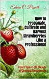 How to Propagate, Cultivate and Harvest Strawberries Like a Professional: Expert Tips on All Aspects of Growing Strawberries