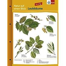 Laubbäume: Naturkundefolder Klasse 1-10 (Natur auf einen Blick)