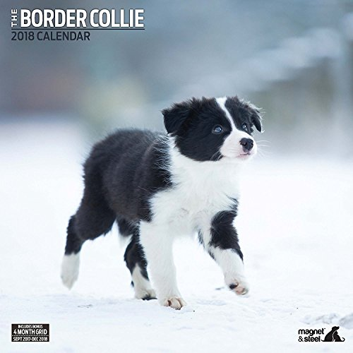 border collie traditional 2018 calendar buy online in uae office product products in the uae see prices reviews and free delivery in dubai