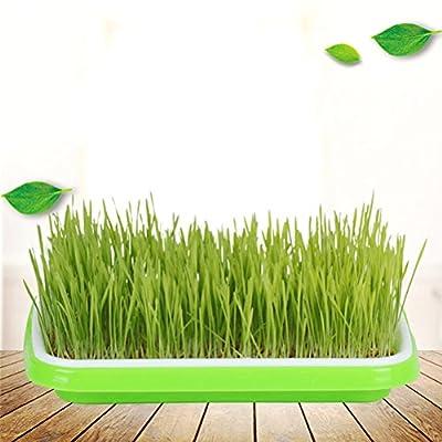 BESTOMZ Seed Sprouter Tray Soil-Free Lebensmittelqualität PP Gesunde Weizengras Züchter von BESTOMZ bei Du und dein Garten