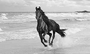 LARGE HORSE CANVAS ART PRINT RUNNING IN THE SEA BLACK AND