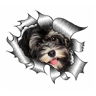 Sticar-it Ltd ZERRISSENES METALL Auto-aufkleber süß Havaneser Welpe Hund design Vinyl decal - Multi, A4 300x200mm approx