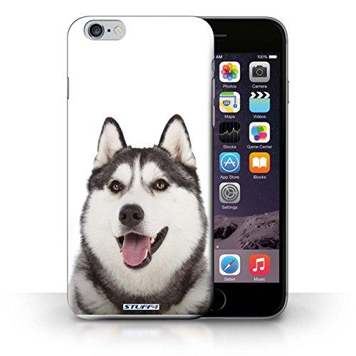 Kobalt® Imprimé Etui / Coque pour iPhone 6+/Plus 5.5 / Dalmatien conception / Série Chiens Husky/Esquimau