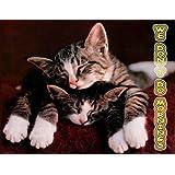 Tabby Kittens, I don't do Mornings Fridge Magnet