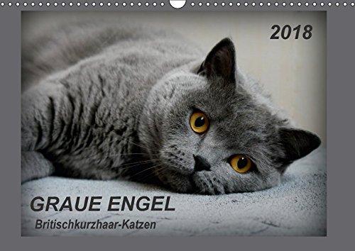 kurzhaar-Katzen (Wandkalender 2018 DIN A3 quer): Traumhafte Porträtfotos von Britischkurzhaar-Katzen (Monatskalender, 14 Seiten ) ... [Kalender] [Apr 14, 2017] Jacky-fotos, k.A. (Engel Haustier-welt)