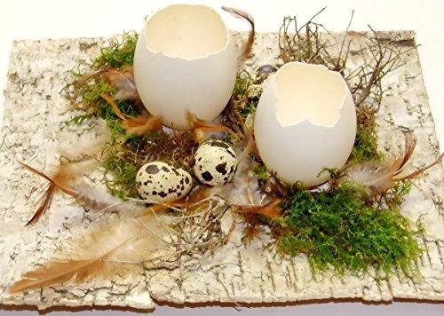 OSTERDEKORATION BIRKE/ SCHLUPFEIER Naturdeko Osterdeko Tischdeko Lifestyle-Deko Saisondeko Geburtstag Valentinstag Einzug Geschenk