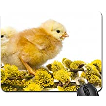 Chics Mouse Pad, Mousepad (Birds Mouse Pad)