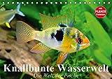Knallbunte Wasserwelt. Die Welt der Fische (Tischkalender 2019 DIN A5 quer): Die bunte Welt der Fische und Wasserbewohner (Geburtstagskalender, 14 Seiten ) (CALVENDO Tiere)