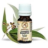 Eukalyptus Öl 100% Naturreines Ätherisches 10ml - Eucalyptus Globulus - China - Besten Für Beauty - Sauna - Aromatherapie - Inhalation - Aroma Diffuser - Duftlampe - Eukalyptusöl Von Aromatika
