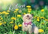 Katzenkalender 2018, Wandkalender, Bildkalender DIN A4, Katzen Kalender, Katzenkalender klein, Katzenfreunde Kalender, Katzenliebhaber Kalender deutsch fuer 2018 Spiralbindung, Wand-kalender für 2018