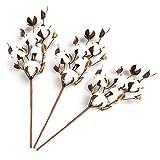 Natürliche Getrocknete Blumen Blossom Baumwolle dekorative Blume DIY Handwerk Decor für Home Party Hochzeit 350cm