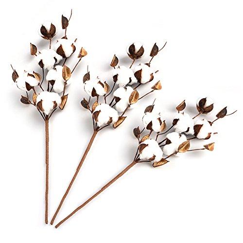 Fiori secchi naturali con veri boccioli di cotone, effetto decorativo, per lavoretti fai da te, per decorare casa, feste e matrimoni, 3 pezzi da 50cm