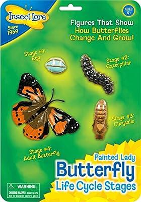 Insect Lore - 48122 - Étapes du Cycle de vie-papillon