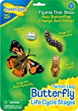 Life Cycle Stages Butterfly