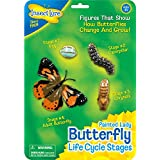 Insect Lore 48122 - Butterfly Life Cycle Stages, Lernspielzeug