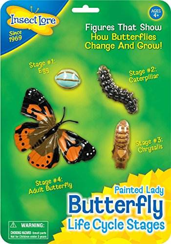 Life Cycle Stages-Butterfly