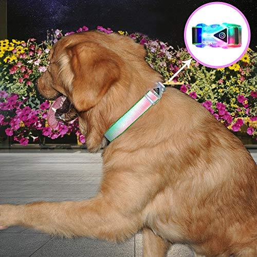 alsband, wasserfest, bunt, reflektierend, für Kleine und mittelgroße Hunde, Medium:35-50CM, grün ()