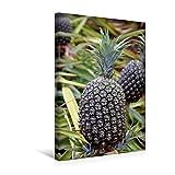 Premium Textil-Leinwand 30 cm x 45 cm hoch, Ananas, Oahu | Wandbild, Bild auf Keilrahmen, Fertigbild auf echter Leinwand, Leinwanddruck (CALVENDO Natur)