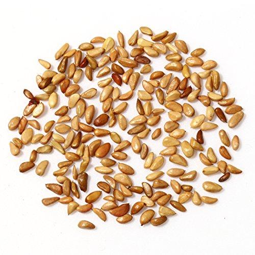 Zoom IMG-3 ncient 200 semi sementi di