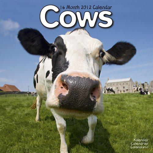 Kalender 2012 Kühe - Rinder - Cows - Kuh - Muh!