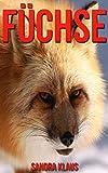 Kinderbuch: Erstaunliche Fakten & Bilder über Füchse