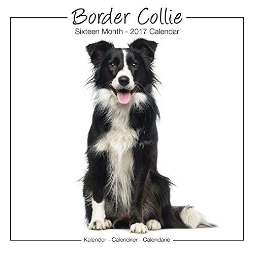 border-collie-studio-calendar-2017