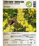 Kräutersamen - Goldrute Echte/Solidago virgaurea 100 Samen
