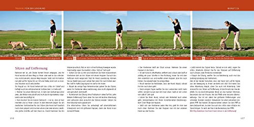 Welpen-Erziehung: Der 8-Wochen-Trainingsplan für Welpen - 8