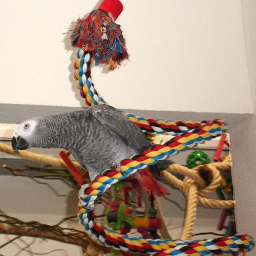 rainforest-caracus-cage
