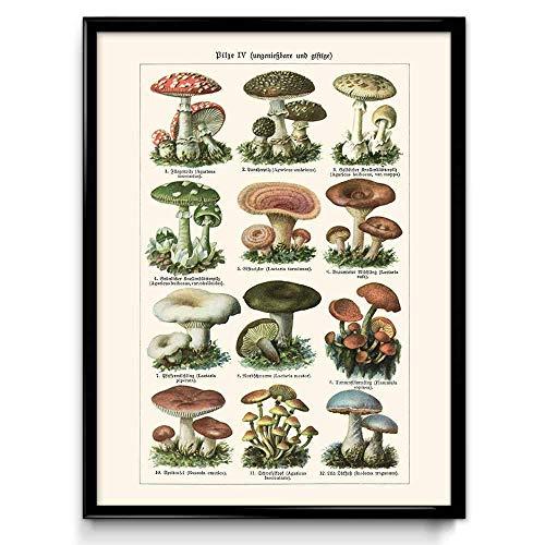 Uno de los cuatro espectaculares rendimientos de setas champignon, hongos y mucho más.