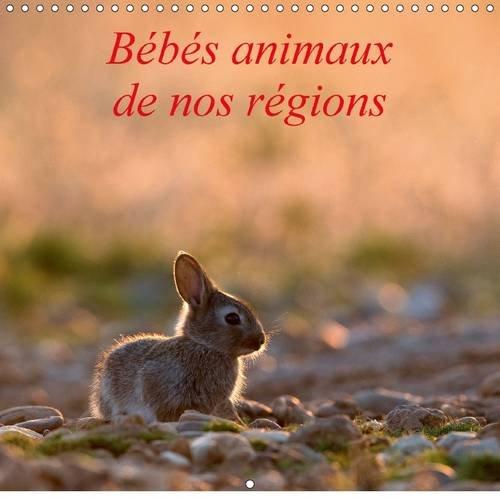 Bebes Animaux De Nos Regions 2017: L'Insouciance Des Bebes Animaux Photographies Sur Le Vif.