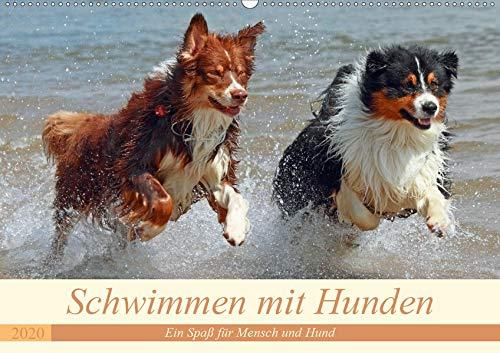 Schwimmen mit Hunden - Ein Spaß für Mensch und Hund (Wandkalender 2020 DIN A2 quer): Hunde beim Tollen im Wasser - es macht einfach Spaß ihnen zuzusehen. (Monatskalender, 14 Seiten ) (CALVENDO Tiere)