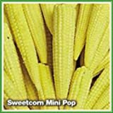 AJP Sweetcorn 'Mini Pop' Seed