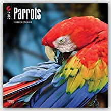 Parrots 2017 Square Wall Calendar