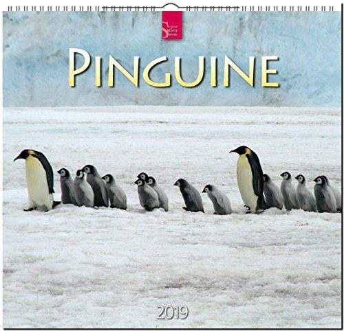 MF-Kalender PINGUINE 2019