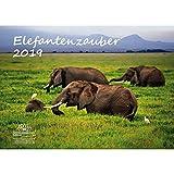 Elefantenzauber · DIN A3 · Premium Kalender 2019 · Elefant · Afrika · Tiere · Wildnis · Natur · Geschenk-Set mit 1 Grußkarte und 1 Weihnachtskarte · Edition Seelenzauber