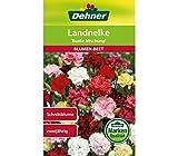 Dehner Blumen-Saatgut, Landnelke