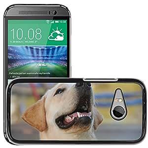 Hard Schale Skin Premium Shell Case Handy Cover Etui // M00148123 Labrador Hundetierhaustier Entzückende // HTC One Mini 2 / M8 MINI / (Not Fits M8)