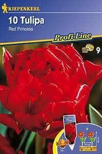 Gefüllte Tulpen, 'Red Princess'