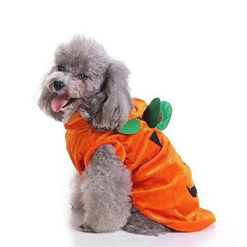 ALCYONEUS Halloween Lovely Kürbis Katze Hund Kostüm Party Fancy Dress PET Bekleidung Hoodie size (Fancy Bilder Dress Kostüme)