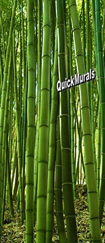 Peel and Stick 36inch W x 84inch H 3D Instant Door/Wall Mural PRINTED ON SELF ADHESIVE CANVAS! Removeable & Re-usable! (Bamboo Grove Door Mural) by Quick Murals