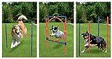 12tlg. Hunde Agility Starter Set