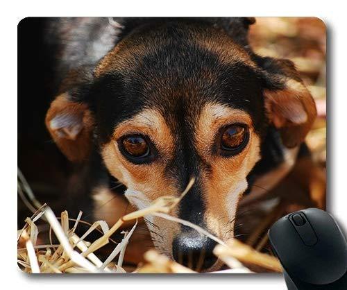 (Augen Mauspad) Gaming Mauspad Mauspad für Mac und Windows Gamer Hund Augen ängstlich Schließen Tierheim Affection für Frauen/Männer / Kinder