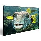 islandburner Bild auf Leinwand Eine Nahaufnahme Von Einem Pufferfish Kugelfisch In Hawaii Wandbild, Poster, Leinwandbild, Deko, Wanddeko, Wandtattoo