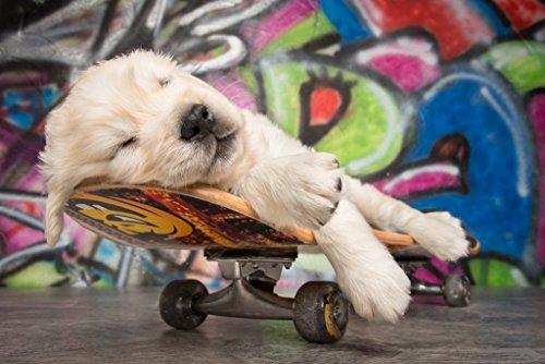 AM Wohnideen Fototapete/Tapete / Tapete *Kinderzimmer Skateboard Puppy*