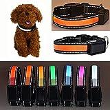 Aution House USB Recargable Collar Reflectante Luces que Destellan LED Admiten la Seguridad del Perro, Impermeable, Apto para Pequeña, Mediana, Grande Mascotas / Perro (L 50-60CM, ORANGE)