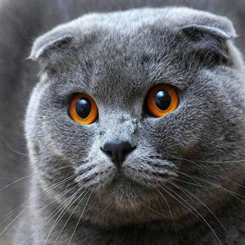 Kit de pintura DIY por Diamond para adultos, niños, decoración para el hogar o la oficina. Greatmin Regalos para su gato gordo americano de aire corto, 11.8 x 11.8 pulgadas, 1 paquete